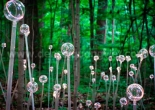 Fiber optic garden light 18